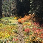 Pct day 132