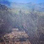 Baja day 11