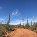 Baja day 23